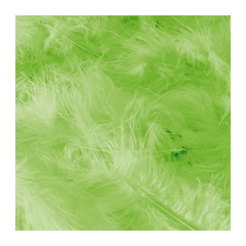 Plumes de dinde - Couleur vert